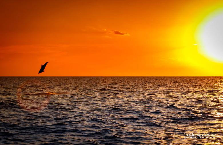 Dolfijn -
