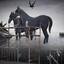 Water voor het paard