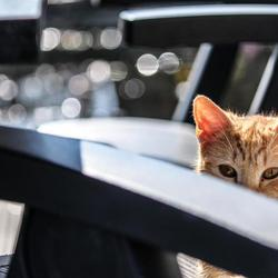 Katte ogen