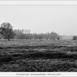 Schaopedobbe - Elsoo - Friesland