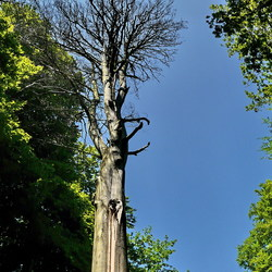 Dode bomen.