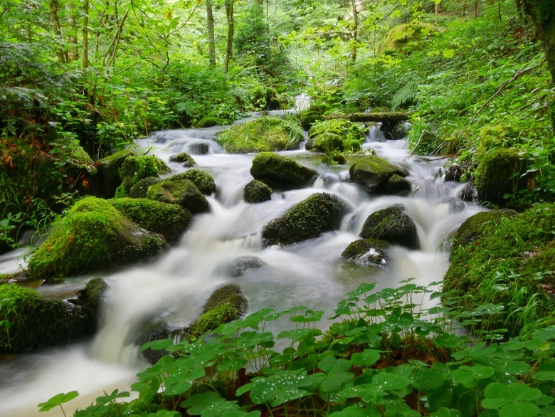 Waterval Zwarte Woud - Waterval in het zwarte woud. Gemaakt met een langere sluitertijd en zonder ND filter!