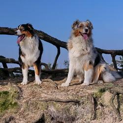 dieren serie 149. Honden