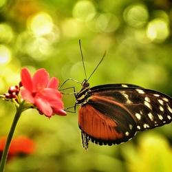 Vlindertje-02
