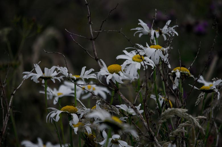 bloemetjes.jpg - bloemetjes