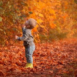 Heerlijke herfstfoto van Bo