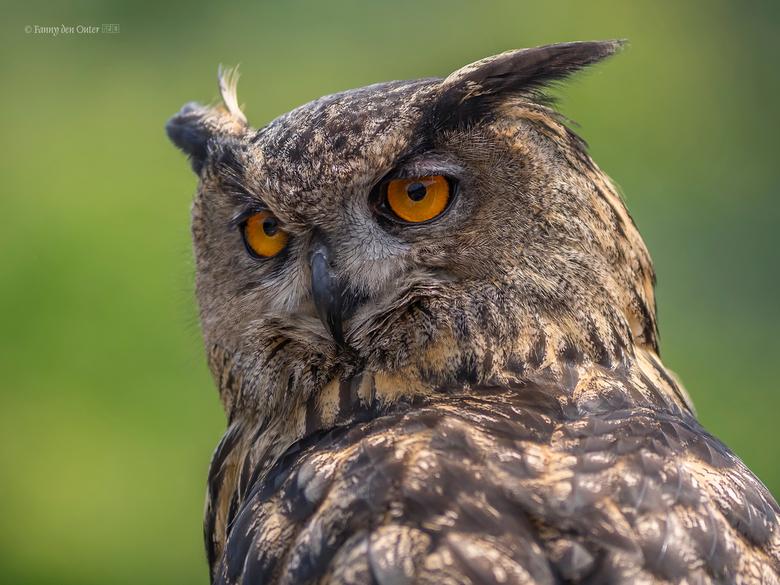 EagleOwl - EagleOwl Oehoe<br />