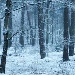 Wintertime IV
