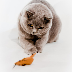 Kat en muis spel...