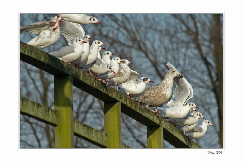 Allemaal op een rij -