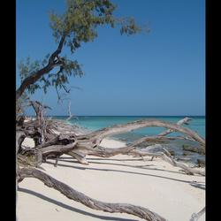 Lady Musgrave - Oostkust Australië