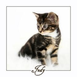 Kitten (5 wk)