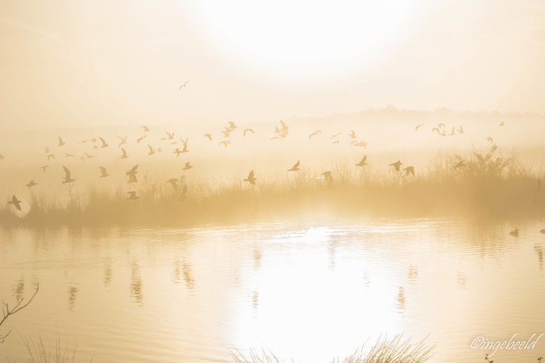 still dreaming - het was bijna onwerkelijk... zo mooi<br /> <br /> groetjes, Inge