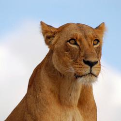 Leeuwin Nairobi park