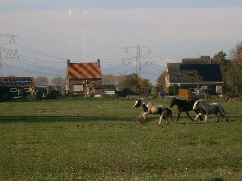 Run free! - Als een paard een paard kan zijn, heerlijk rennen met de kudde!