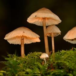paddestoeltjes op mos in het bos