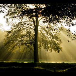Zie de zon schijnt achter de bomen....