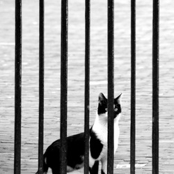 Schele kat