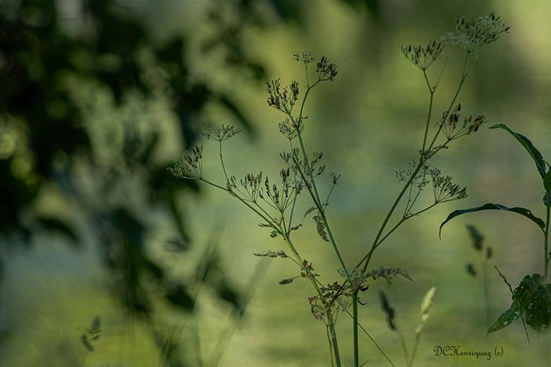 Uitgedroogd  - Door de droogte is alles uitgebloeid maar het levert wel mooie onderwerpen om te fotograferen. <br /> <br /> Iedereen bedankt voor de