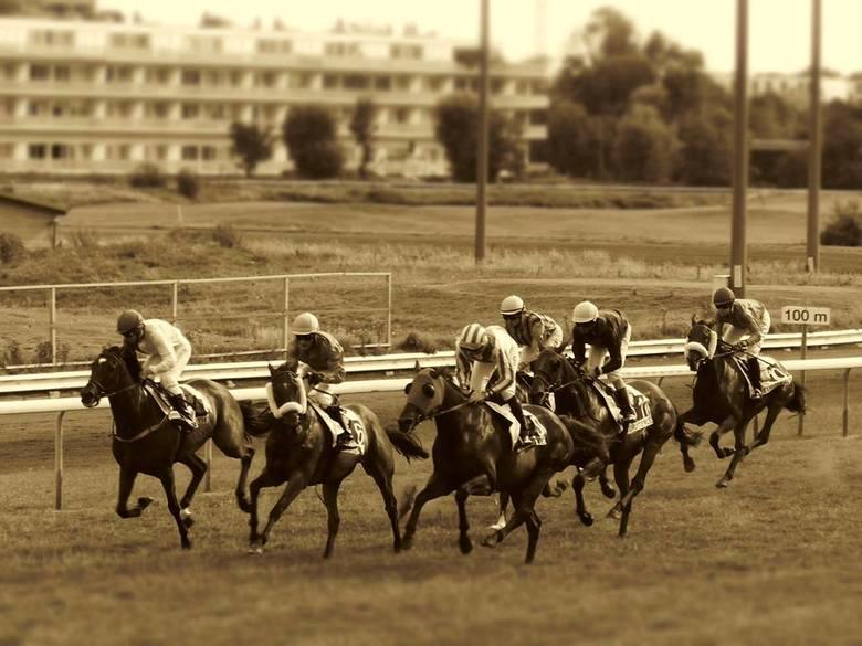 Paardenkoers - Oostende - vanuit tribine een foto getrokken, was zeer blij met het resultaat