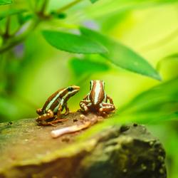 kikkers Botanische zoomdag foto 4