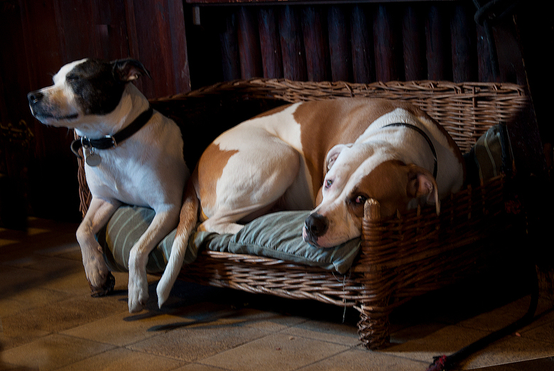 Een hondenleven -