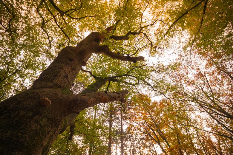 Van onderen. - Kijk eens omhoog als je in het bos gaat fotograferen.