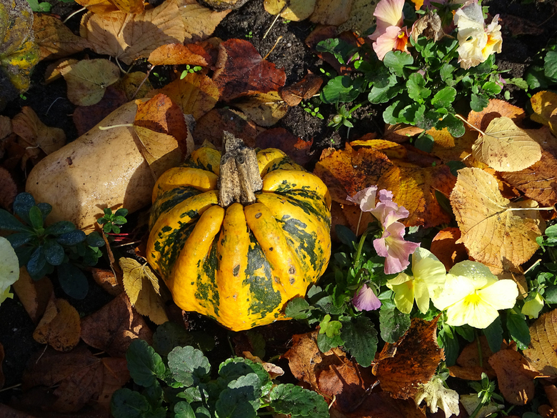 Ook Artis - In artis doen ze de laatste jaren veel met bloemen en planten om de omgeving te verfraaien. Prettig weekend allemaal. gr. Nel