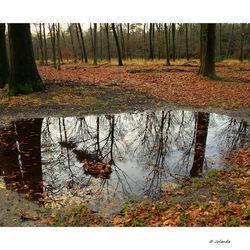 Tree reflections......