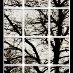 Reflecting tree 03
