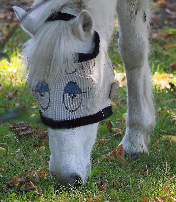 oogjes   - Moest gisteren weer een paar mensen fotograferen op een dressuurwedstrijd, maar ja deze pony ken ik al jaren en die had ATV en met zijn vli