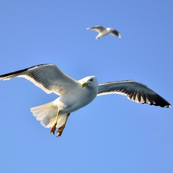 I wanna fly like a uhhh seagull...