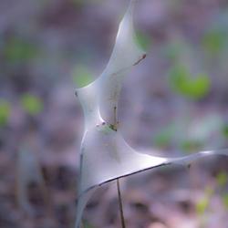 Kunstwerk Spinselmot