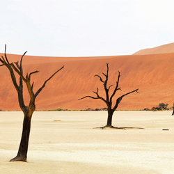 Deadvlei - Panorama