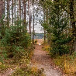 bospaadje naar de heide