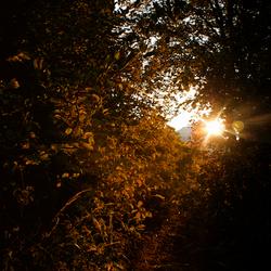 Doorkijkje in de avondschemer