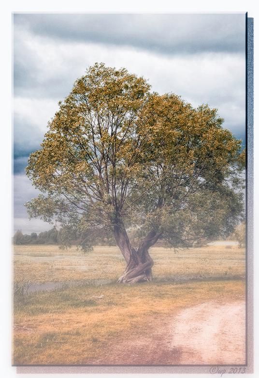 Feit of fictie? - Een foto van een eenzame boom in de mist. Toch?