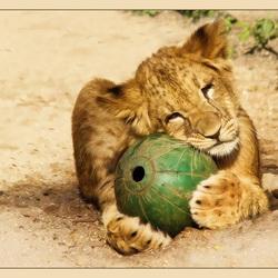 Mijn bal..
