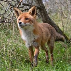 Miss Fox..