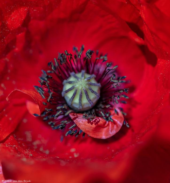 Where the heart is ... - Nog een van mijn favoriete bloemen. Nu kom je ze overal tegen in de natuur.