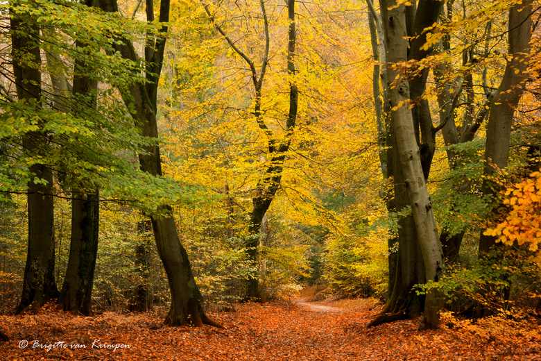 Golden forest revisited