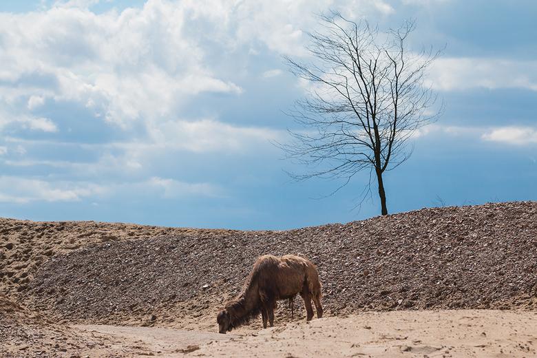 Wildlife Emmen - 02 - Deze foto heb ik deze vakantie gemaakt in het nieuwe Wildlands in Emmen.<br /> <br /> Hier zijn de andere foto&#039;s te zien