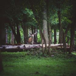 O, Deer...