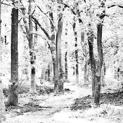 De pad richting het diepe bos