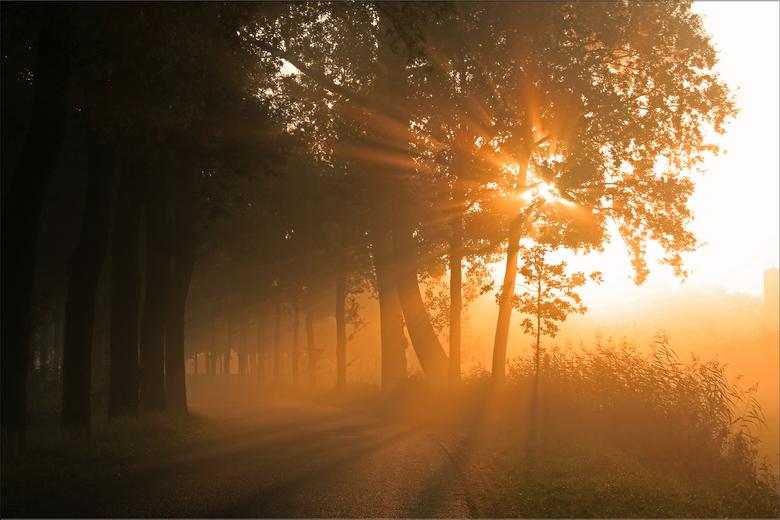Golden Hour - Vanmorgen genoten van de prachtige zonsopkomst in de nevelige omgeving.<br />