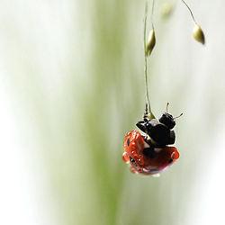 Bungelen aan een plantje