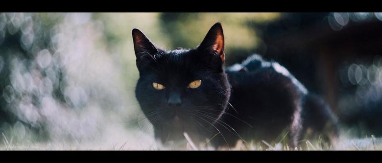 Kat op gras - Kat op gras.<br /> <br /> <br /> <br /> <br /> ©MotionMan 2020