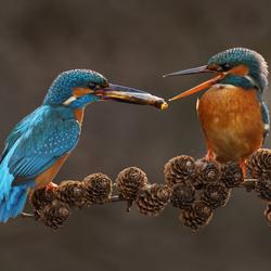 Een visje voor mijn lief