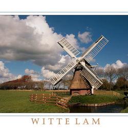 Witte Lam
