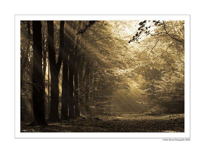 Bruin bos - Het geeft een enorme kick als je bijna zeker weet wat je zult aantreffen als je naar een plek als deze toerijdt en het dan ook echt ziet.<